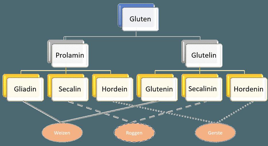 Gluten Prolamin Glutelin